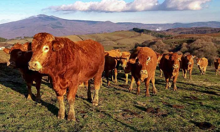 us-the-cows-and-the-rest-of-the-countryside